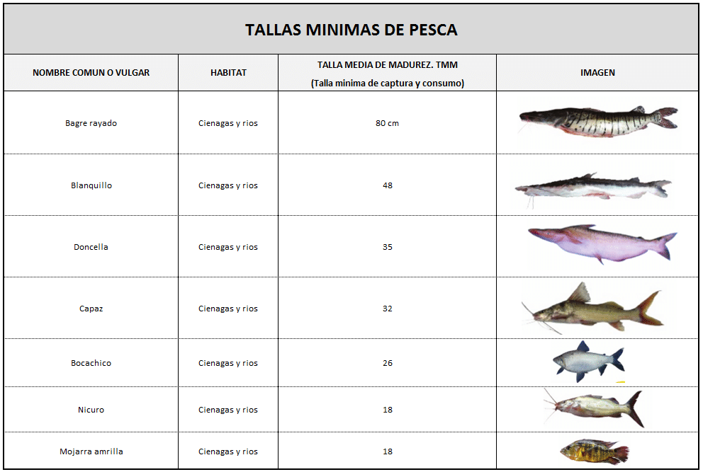 tallas minimas de pesca o de captura