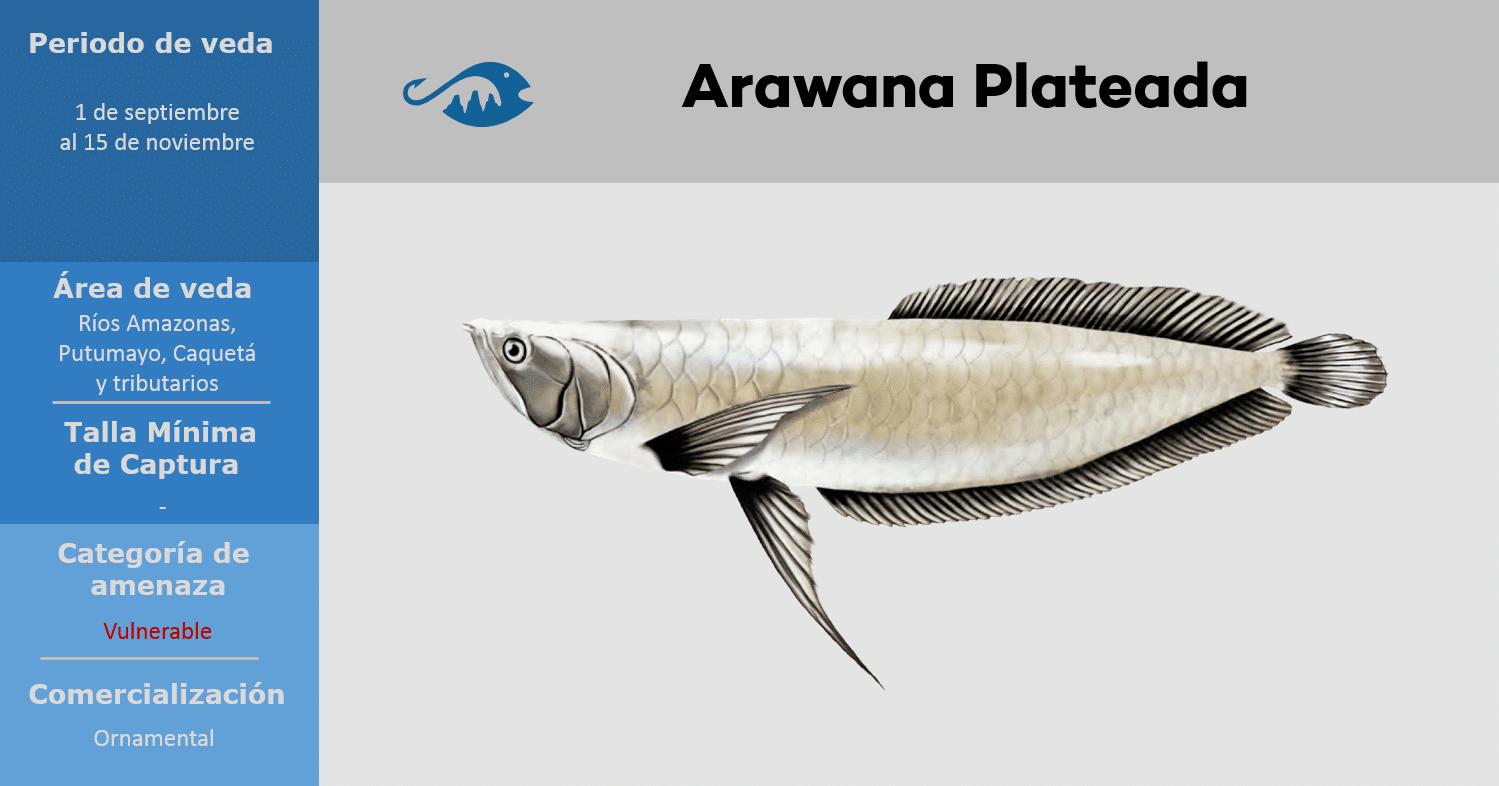 veda de pesca pez arawana