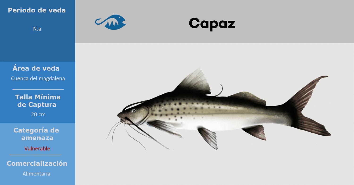 veda de pesca pez capaz