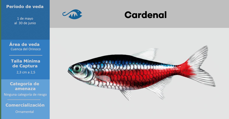 veda de pesca pez cardenal