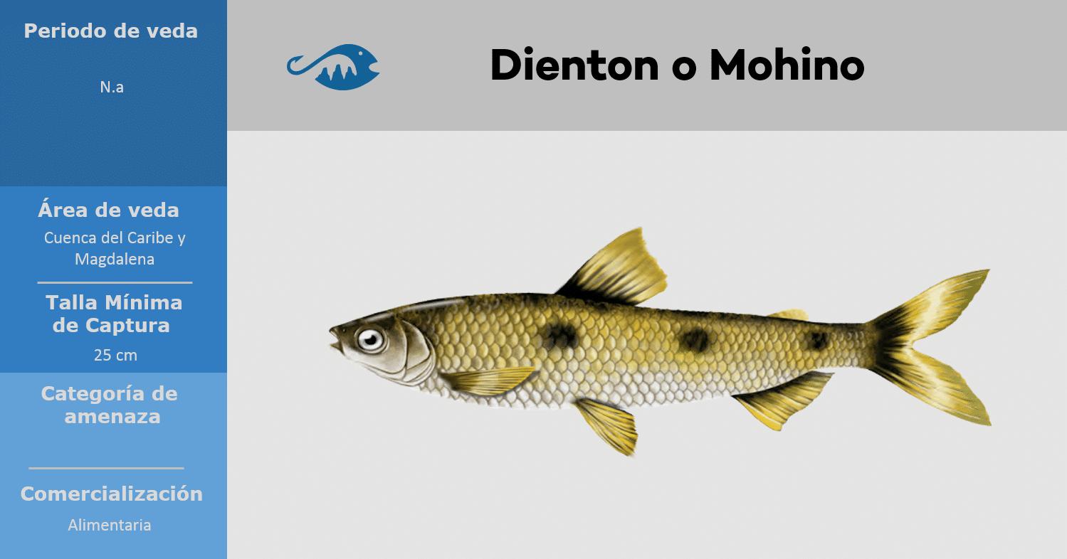 veda de pesca pez dienton