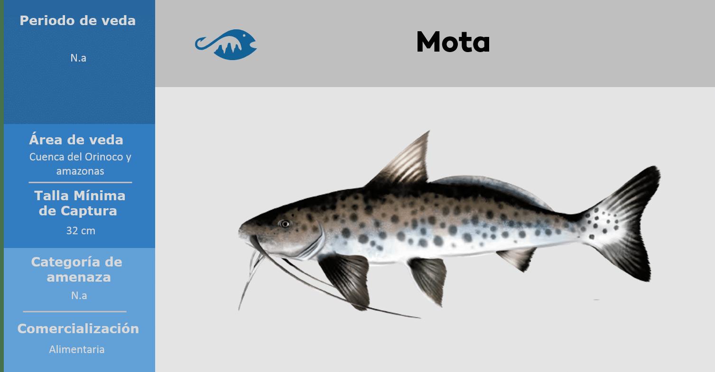 veda de pesca pez mota