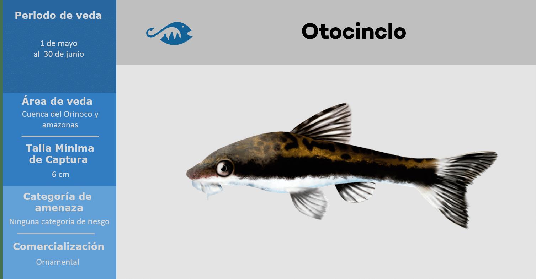 veda de pesca pez otocinclo