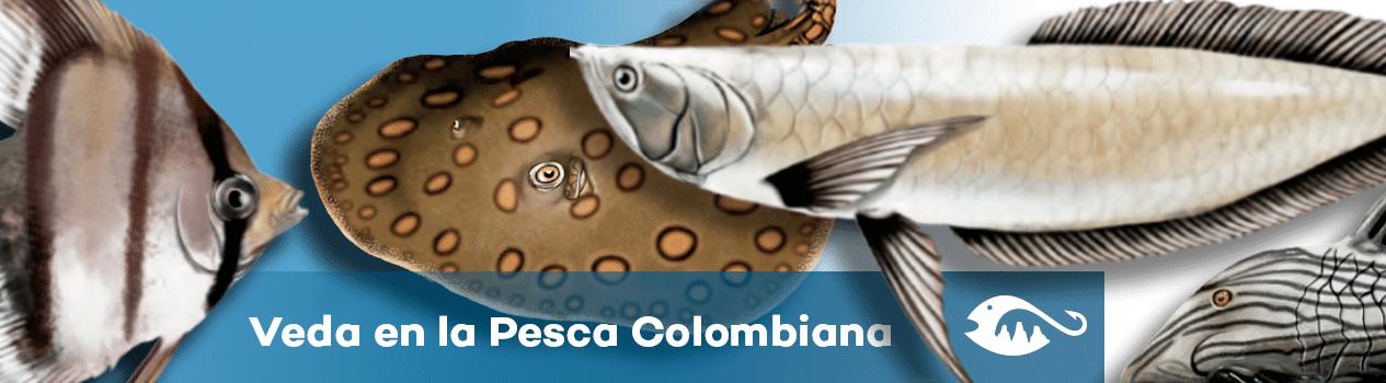 veda en la pesca colombiana