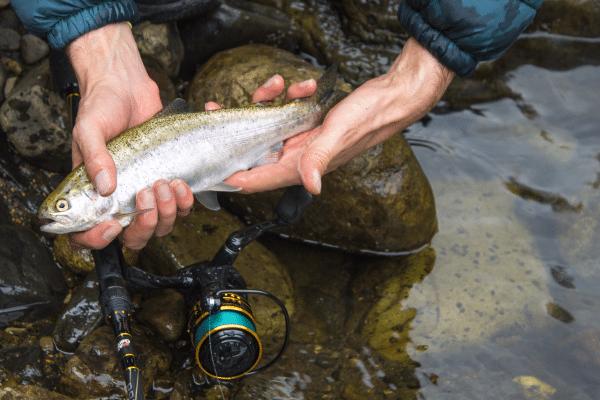 curso pesca de trucha cundinamarca