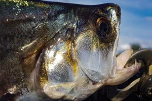 pesca caño bocon