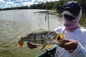 pesca de pavon colombia