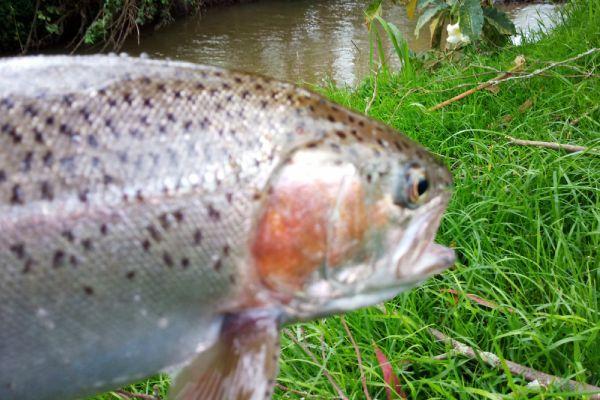 pesca en cundinamarca
