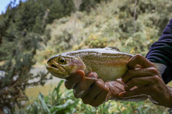 pesca_cerca_a_bogota_17
